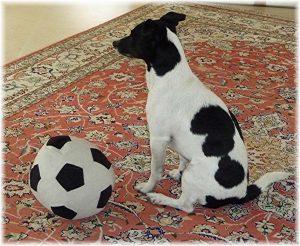 Filou Fussball klein