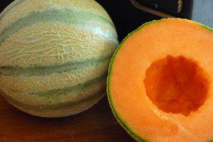 Charentais-Melone (2)