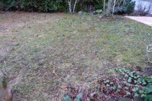 Das war einmal ein gepflegter Rasen.